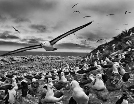 Black and White Photography by Sebastião Salgado | Posters | Scoop.it