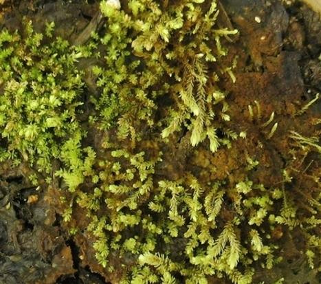 Des plantes revivent après plus de 400 ans sous la glace ! | Ca m'interpelle... | Scoop.it