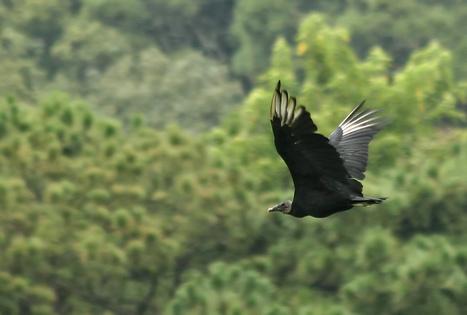 Mais de mil espécies da fauna brasileira correm risco de extinção - EBC | Ambiente | Scoop.it