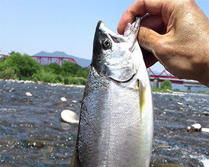 FIS - Worldnews - How do fish know when to spawn? | world | Scoop.it