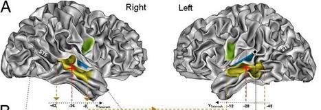 Deric's MindBlog: A landmark for our human brains. | Social Neuroscience Advances | Scoop.it