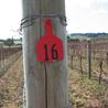 Pinot Post
