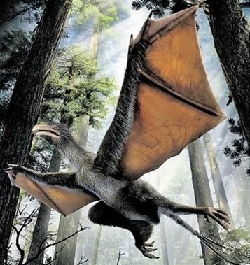 Tamanho de pombo e asas de morcego: um dinossauro - Diário de Notícias - Lisboa | Milhares de milhões de anos... a mesma Terra ! | Scoop.it