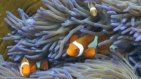 Efforts to save Great Barrier Reef 'too slow' - BBC News | The Great Barrier Reef | Scoop.it