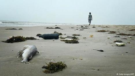 #FF Unexplained fish deaths disrupt #Vietnam vote #Asia   Messenger for mother Earth   Scoop.it