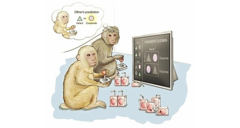 Brain cells predict opponent's move in game-playing monkeys | Neural Sciences. | Scoop.it