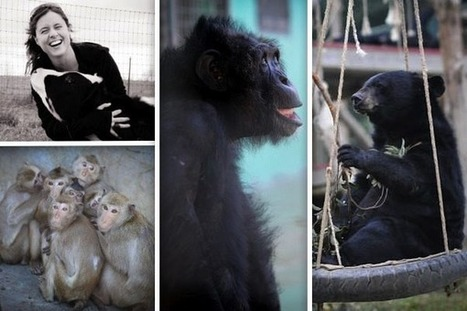 Featured Green Monster: Jo-Anne McArthur, Animal Rights Photographer - One Green Planet (blog) | Animals R Us | Scoop.it
