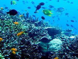 BusinessMirror - DENR to strengthen coastal, marine biodiversity-conservation program   Water Stewardship   Scoop.it