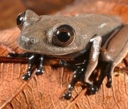 Una expedición científica descubre 60 nuevas especies en Surinam incluida una 'rana chocolate' - ANTENA 3 TV | rana chocolate | Scoop.it