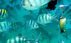 How can we make our oceans well again?   OUR OCEANS NEED US   Scoop.it