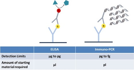 Immuno-PCR: molecular and Immunological techniques combined in DNA amplification | Virology and Bioinformatics from Virology.ca | Scoop.it