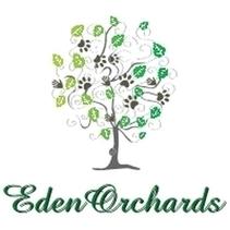 Eden Orchards American Cockapoo Puppies for sale | Cockapoo | Scoop.it