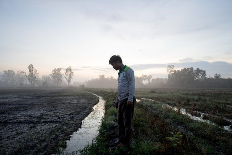 Drought and 'Rice First' Policy Imperil Vietnamese Farmers | The Barley Mow | Scoop.it