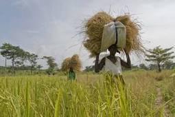 FAO Regional Conference boosts Africa Solidarity Trust Fund | Questions de développement ... | Scoop.it
