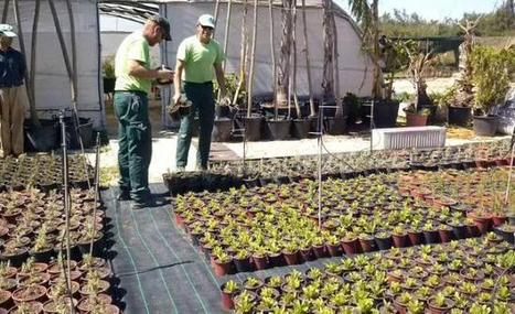 El Ayuntamiento ahorrará 20.000 euros en jardinería con la ... - Información | El cultivo de gladiolos | Scoop.it