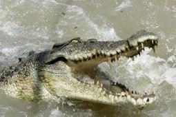 Un crocodile fait la peur de sa vie à un photographe | Trollface , meme et humour 2.0 | Scoop.it