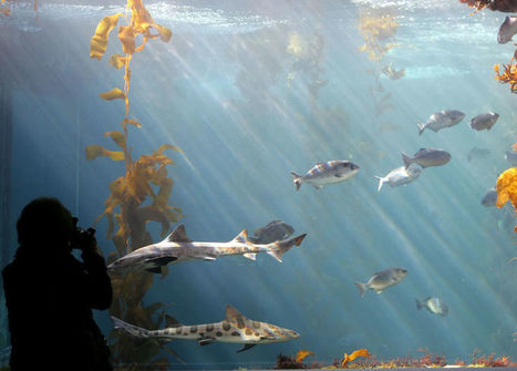 The Underwater Farms That Could Help Stop the Death of Our Oceans | KNOWING............. | Scoop.it