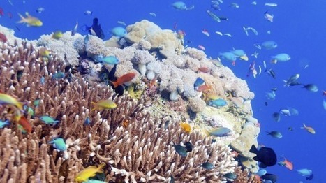 Marine protected areas around the world failing to support corals and fish, researchers say | Farming, Forests, Water, Fishing and Environment | Scoop.it