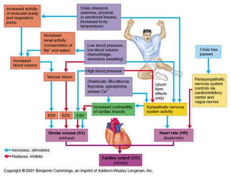 Cardiac Equations | FRCA MCQ | Scoop.it