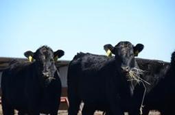 South Dakota Ranchers Embrace Needed Livestock Donations - AgWeb   Animal Science   Scoop.it