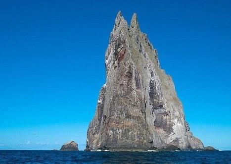 Un insecte géant redécouvert 80 ans après au milieu du Pacifique / Lord Howe Island stick insect | EntomoNews | Scoop.it