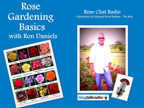 Rose Chat Radio | Win Free Roses | Great Guests | Annie Haven | Haven Brand | Scoop.it