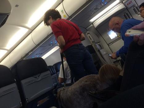 Un avion dévié pour une crotte de chien   CaniCatNews-actualité   Scoop.it