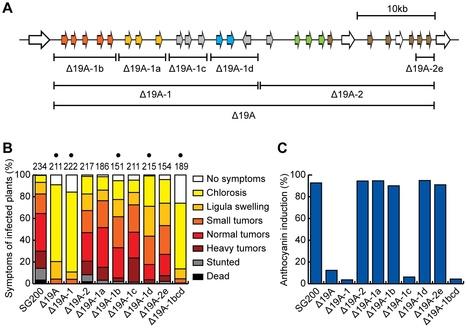 PLOS Pathogens: Characterization of the Largest Effector Gene Cluster of Ustilago maydis (2014)   Plant Pathogenomics   Scoop.it