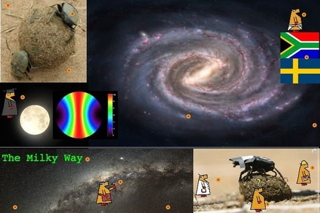 Dung Beetles Directed by the Milky Way!   Jabberites   The interactive Classroom   Scoop.it
