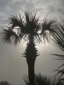Tropical Storm Survival Tips for Travelers | tropical traveling | Scoop.it