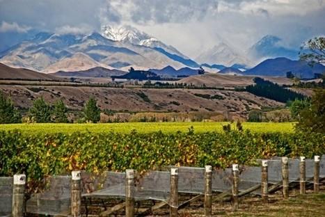 EU grants NZ organic wine parity   Essência Líquida   Scoop.it