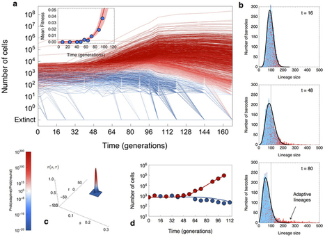 Quantitative evolutionary dynamics using high-resolution lineage tracking : Nature : Nature Publishing Group | genomics | Scoop.it