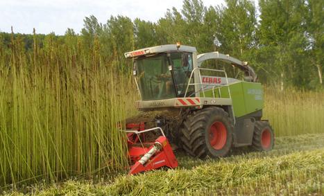 Le chanvre, un pari sur l'avenir dans le Sud Ouest | Agriculture en Dordogne | Scoop.it