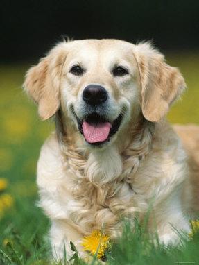 Features of dog training salt lake city - My Glam Network | dog grooming utah | Scoop.it