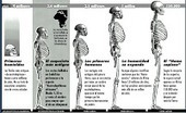 ORIGEN - EVOLUCIÓN: HOMBRE - Notas Barinas   la evolución de los organismos   Scoop.it