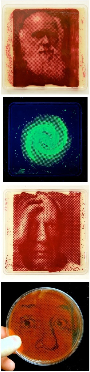 Bacteriograph: Photographs Printed with Bacterial Growth | Amazing Science | Scoop.it