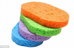 Sponges could harbor paralyzing bacteria | Cleaning and Maintenance Management | CALS in the News | Scoop.it