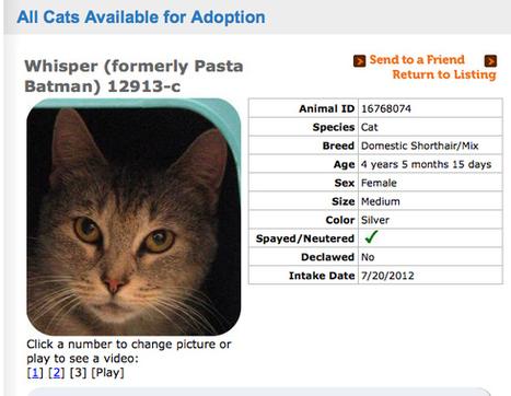 Massive Cat Name Change FAIL | Digital-News on Scoop.it today | Scoop.it