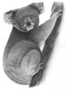 How to Draw a Realistic Koala, Step by Step, forest animals ... | Drawing | Scoop.it