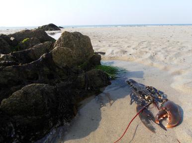 Pêche à pied : les bonnes pratiques | Locquirec Tourisme | Scoop.it