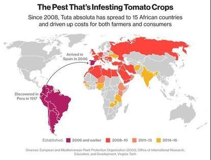 Africa's Big Tomato Pickle: Miner Grubs Are Wiping Them Out | Popular Science | Scoop.it