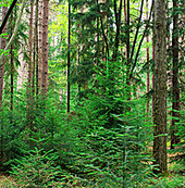 American Forest Foundation announces improved tree farm certification standards   Forestry   Scoop.it