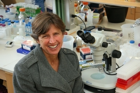 Rice researchers redress retraction   Plant Biology Teaching Resources (Higher Education)   Scoop.it