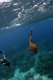 Belize Barrier Reef - Shark Research - Earthwatch Expeditions | Belize in Social Media | Scoop.it