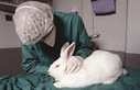 China Finally Put an End to Mandatory Animal Testing | Experimentación animal | Scoop.it