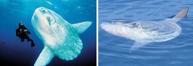 AeroVironment's Mola Robot Flies Underwater on Solar Power | biomimicry | Scoop.it