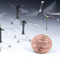 Robotic insects make first controlled flight | Friday Thinking 10 May 2013 | Scoop.it