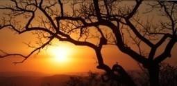 Poľovníctvo - Recenzia | Favorite blog posts | Scoop.it