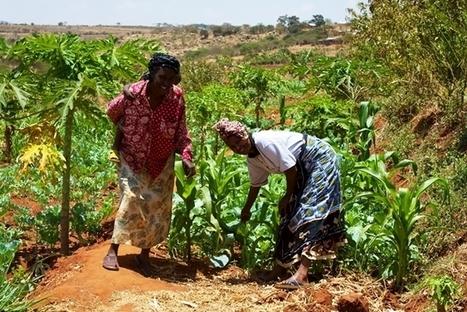 Les luttes paysannes célébrées | Questions de développement ... | Scoop.it