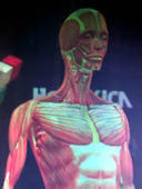 Giant hologram gives training extra dimension | News | | the web - ICT | Scoop.it